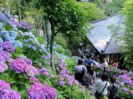 【職場旅行モデルコース】「海街Diaryの舞台を巡る鎌倉」日帰りプラン