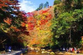 【職場・社員旅行モデルコース】養老渓谷の紅葉と鴨川シーワールド 日帰り