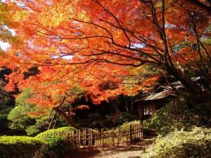 【職場・社員旅行モデルコース】都内の紅葉と浅草ビューホテルのランチ満喫 日帰り