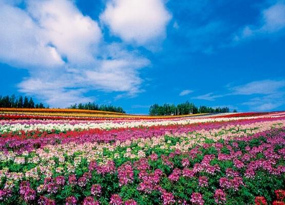 【職場旅行・社員旅行モデルコース】北海道 景観巡り 3日間