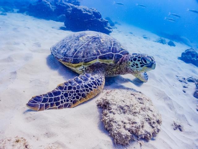 【職場・社員旅行モデルコース】渡嘉敷島に行こう!体験もいっぱいの沖縄3日間