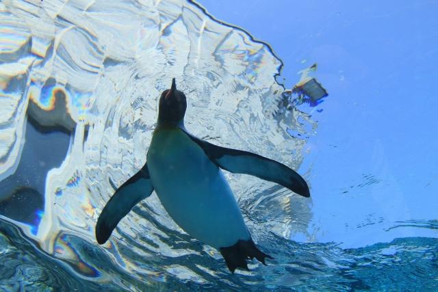 【職場・社員旅行モデルコース】北海道の自然と動物に癒される 2日間の旅 ≪旭川・大雪山≫