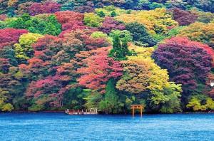 芦ノ湖と紅葉