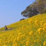 【職場旅行おすすめモデルコース】春に行きたい! 家族のおでかけにもおすすめのコース 千葉日帰り