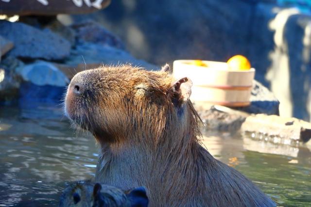 【熱海・赤沢】人気「謎解きミッションゲーム」と絶景温泉で美肌になろう
